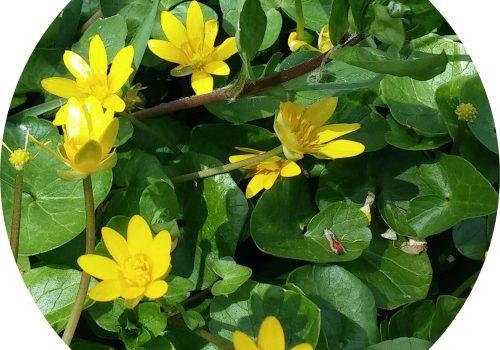 Verschijnselen in de tuin – een lesje in fenomenologie